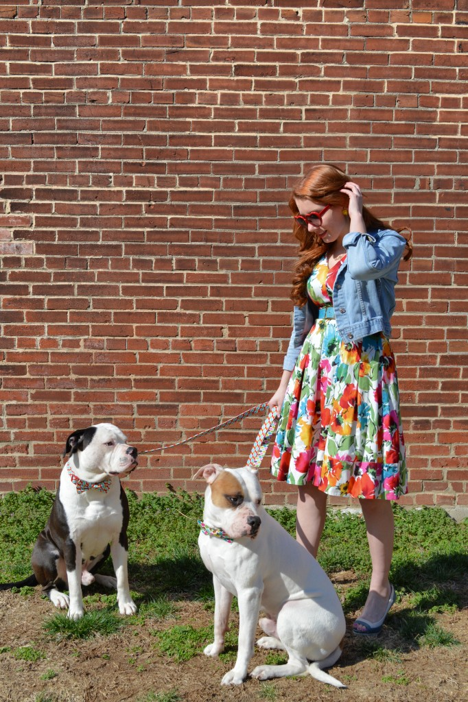 Bulldogs in Bowties plus Floral Dress (7)