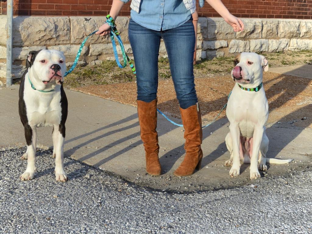 Bulldogs and Denim Bloopers (6)