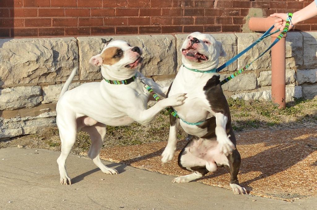 Bulldogs and Denim Bloopers (8)