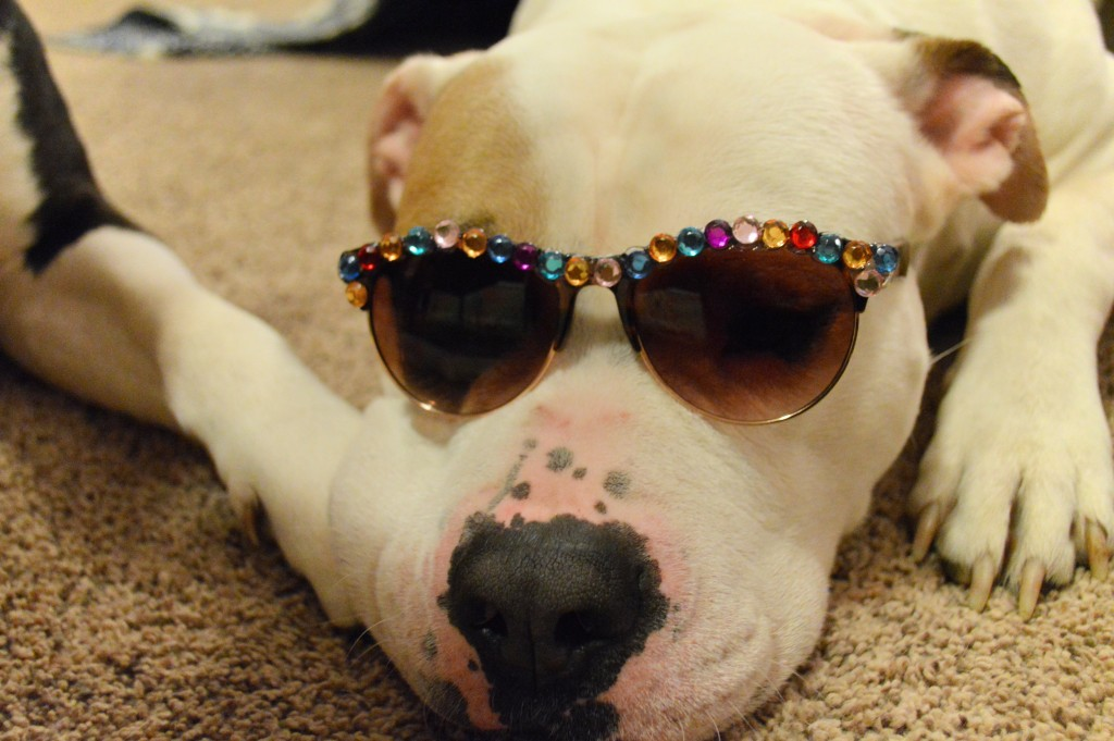 oh julia ann - diy rhinestone sunnies -  sunglasses - dog